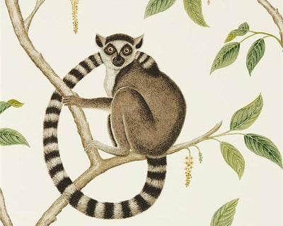 Sanderson Ringtailed Lemur Cream/Olive 216664 Wallpaper
