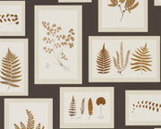 Sanderson Fern Gallery Charcoal/Spice 215713 Wallpaper