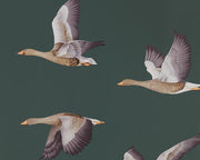 Sanderson Wallpapers Elysian Geese Amsterdam Green 216608 Wallpaper