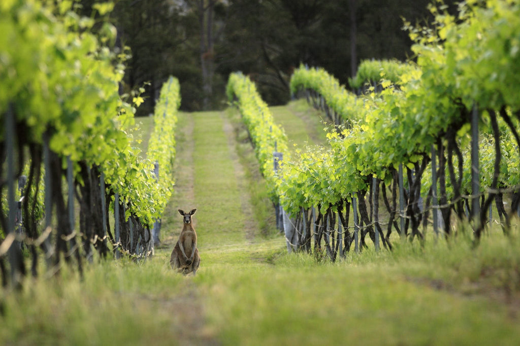 Down under: Down to earth wines