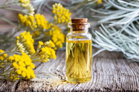 Helichrysum Italicum essential oil in a corked glass bottle over a wooden surface beside fresh Helichrysum Italicum flowers and sprigs.