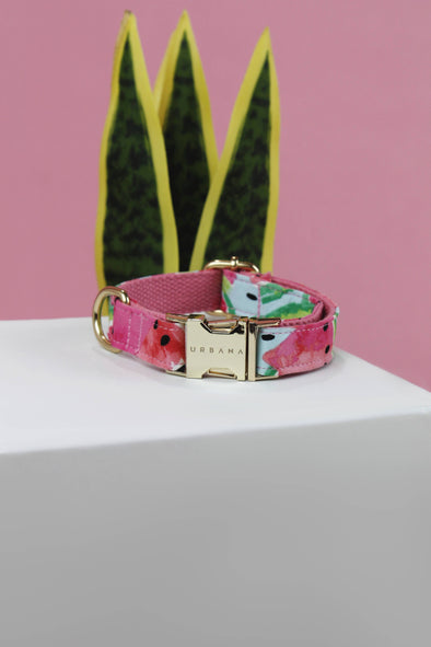 Accessories - Watermelon Love Dog Collar - wynwoodtribe