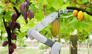 The future of Cacao farming: CocoaBots
