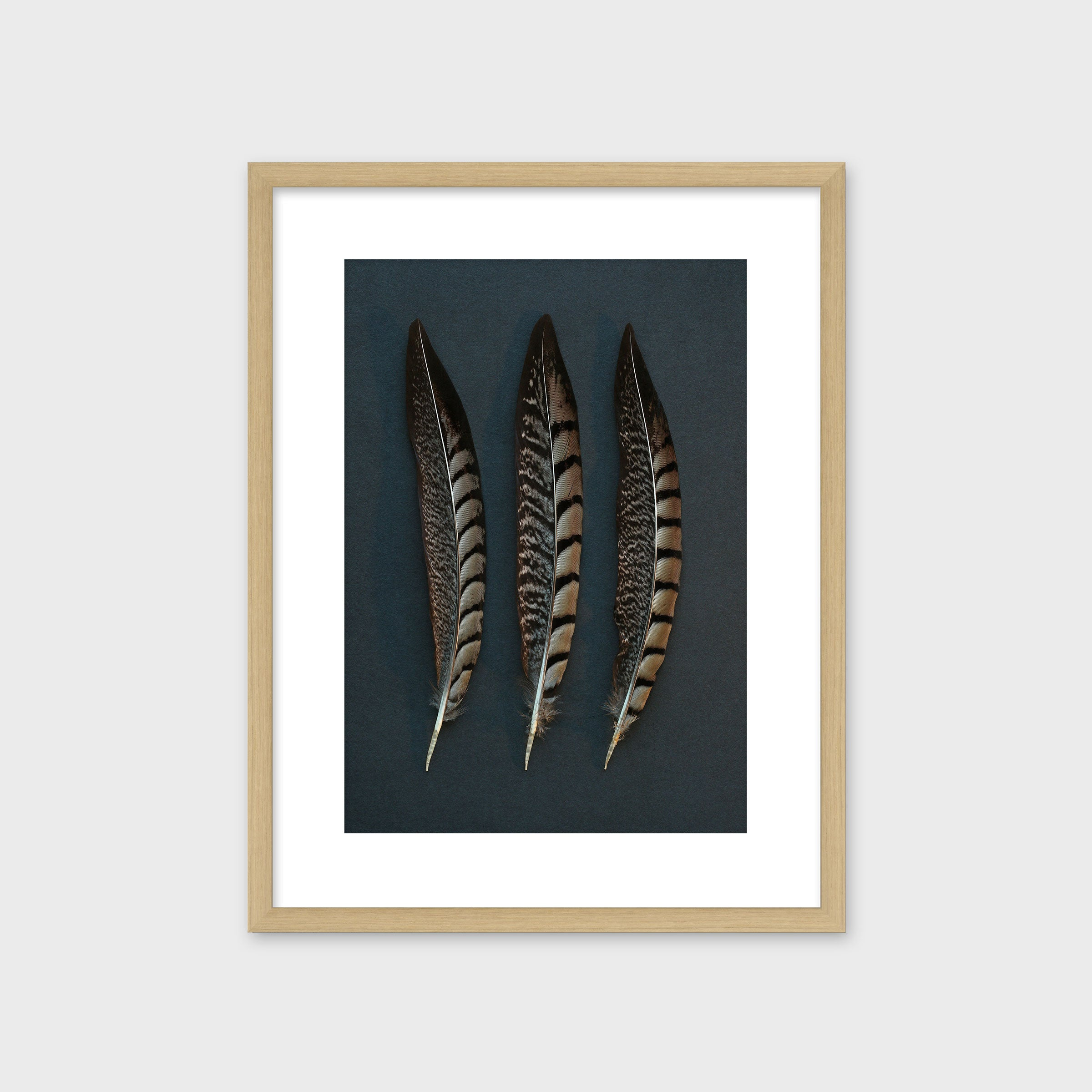 Three Pheasant Feathers