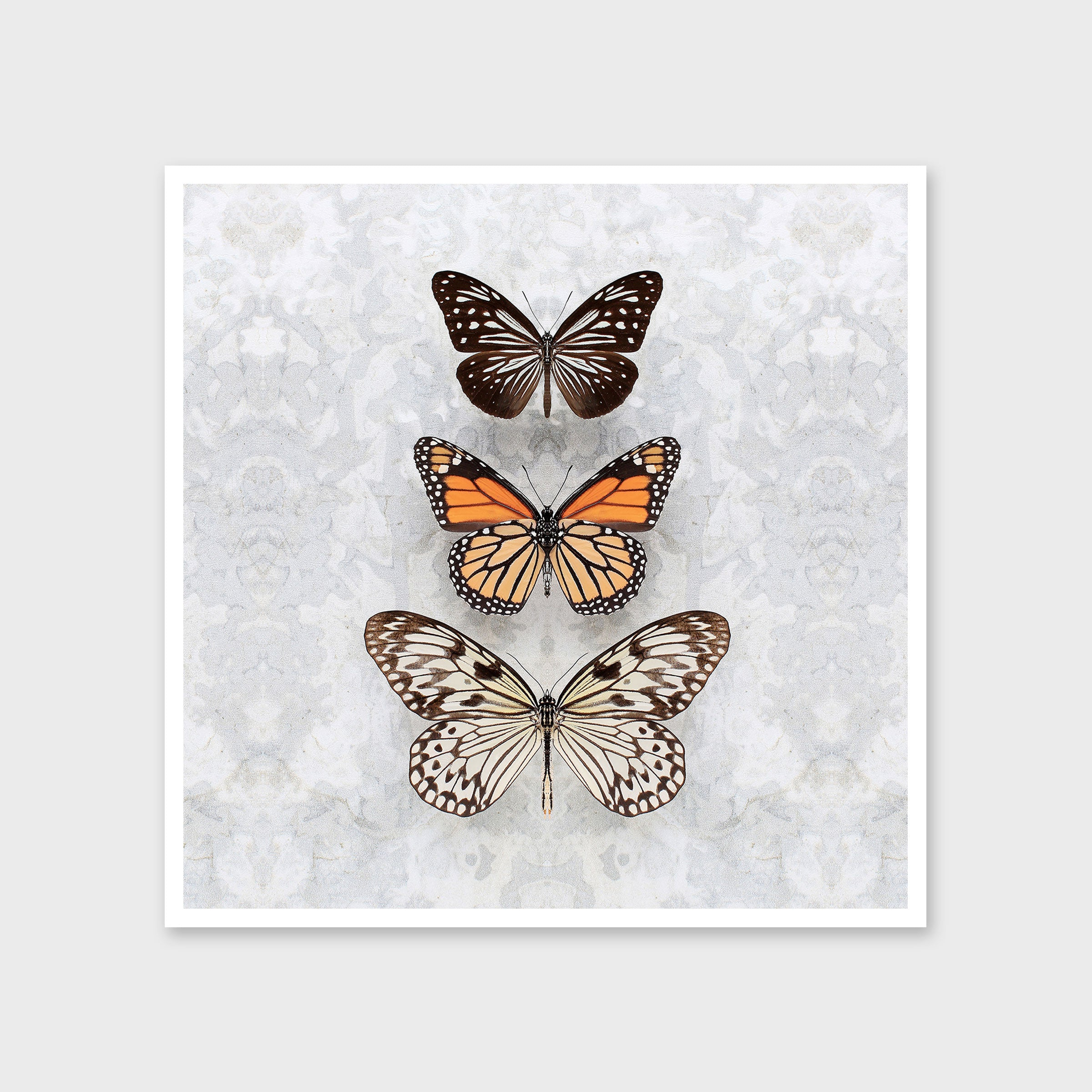 Three Speckled Butterflies