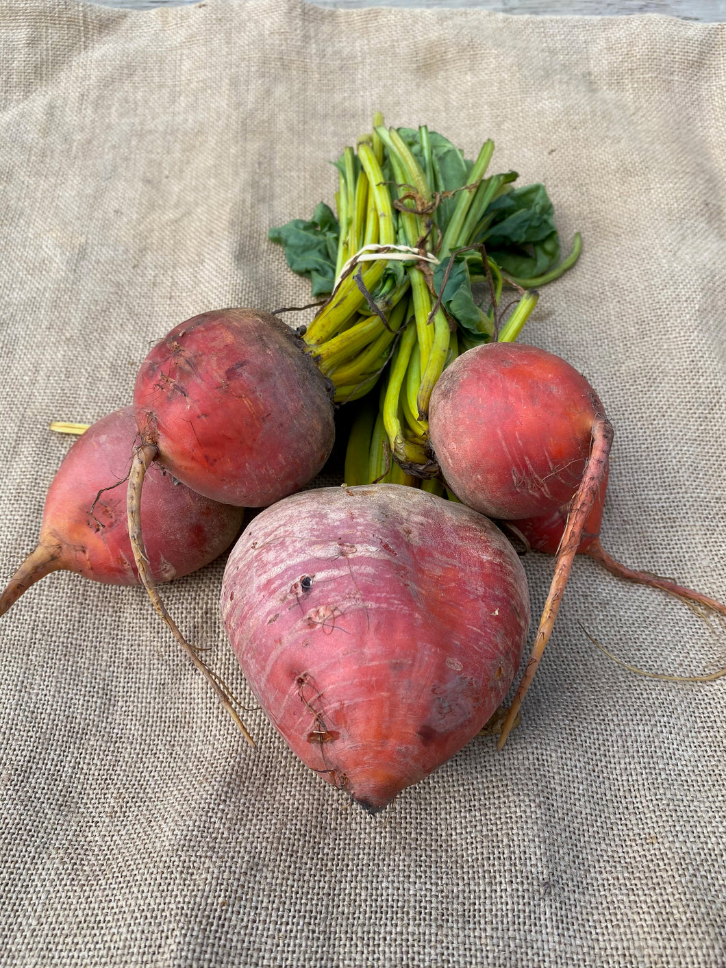 Golden Beetroot