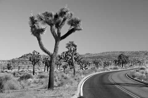 Joshua Tree Highway