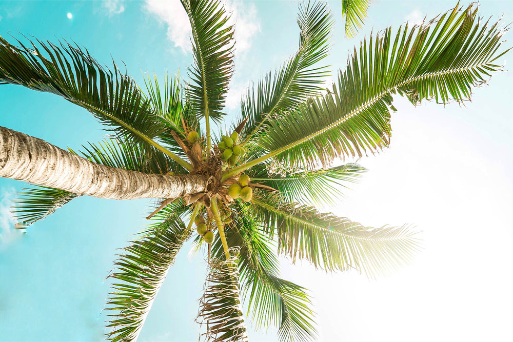 Kind Coconuts - Kind to the Planet Banner Palm Tree - Sustainability