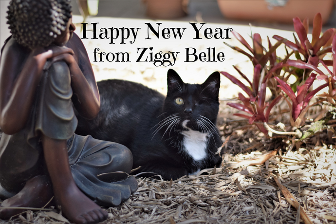 Happy New Year from Ziggy Belle