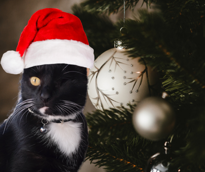 Not all cats have a home this Christmas