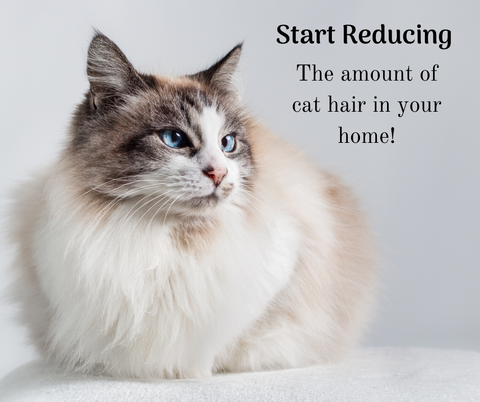 Start reducing the amount of cat hair in your home