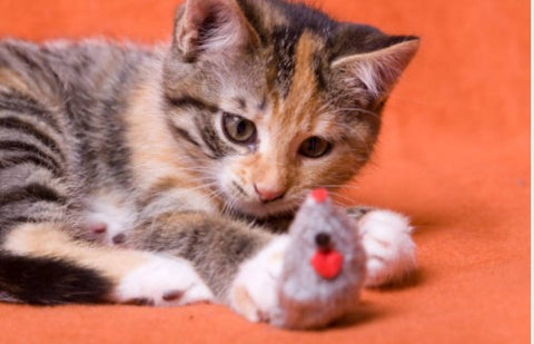 Cat playing with a mouse