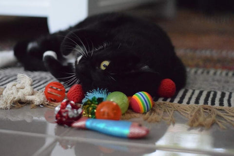 Ziggy with her toys!