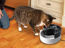 Load image into Gallery viewer, Fung Shui Yin and Yang Pioneer Cat Fountain 1.7lt - Ziggy Belle