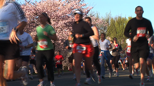 10184R - RUNNERS PASS CHERRY BLOSSOM TREES