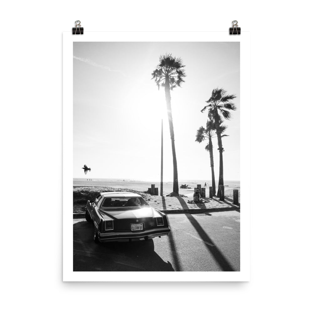 california, palm trees, vintage car