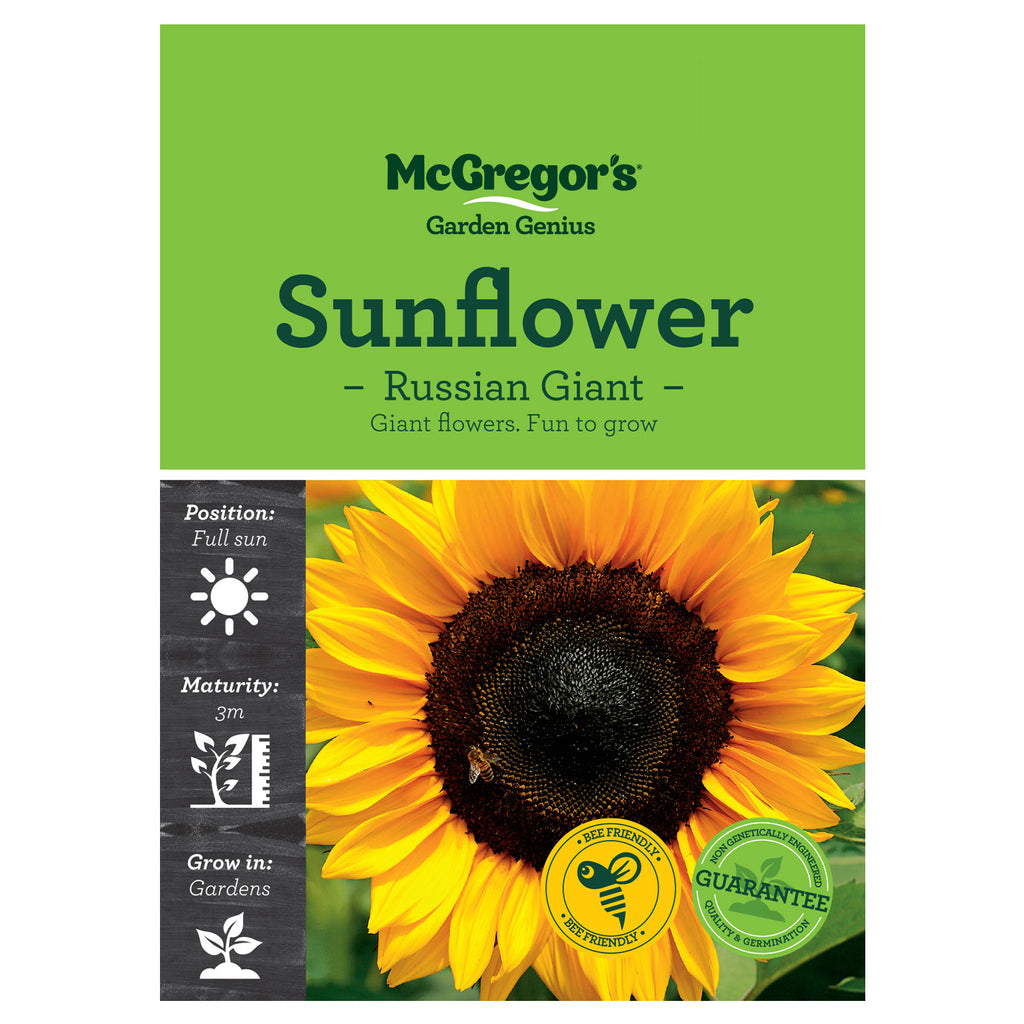 Russian Giant Sunflower Seeds - Flowers