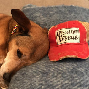 Live Love Rescue Hat - Inspired Evanston