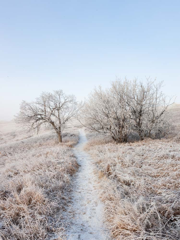 Hoarfrost and Fog, Calgary 2016