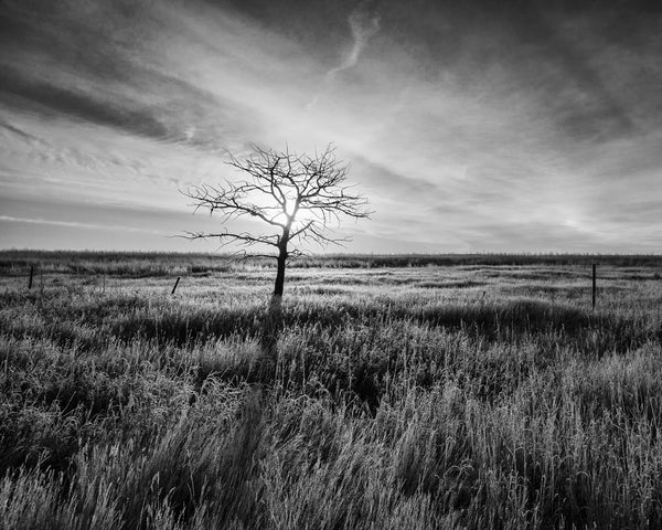 Lone Tree, Sunrise, Saskatchewan 2012
