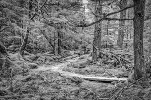 Forest Path, Haida Gwaii, 2012