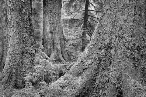 At the Foot of Giants, Haida Gwaii, 2012