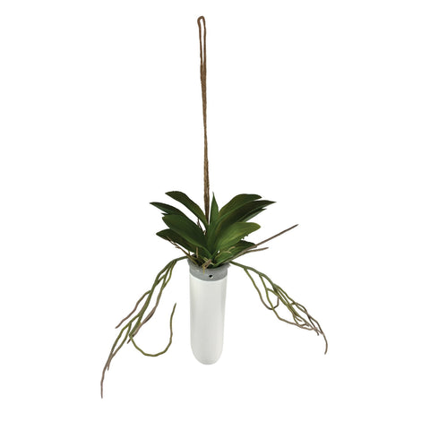 Daintree Hanging Succulent - Small
