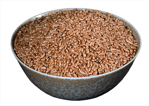 Wheat Berries, Hard Red Organic, 50 lb Bag HB