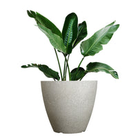 Load image into Gallery viewer, FANTASTIC :) 15-INCH Egg Shape Decorative Plastic Thin Planters, Sand Brunsh Finish