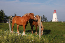Load image into Gallery viewer, Lighthouse Stables Two