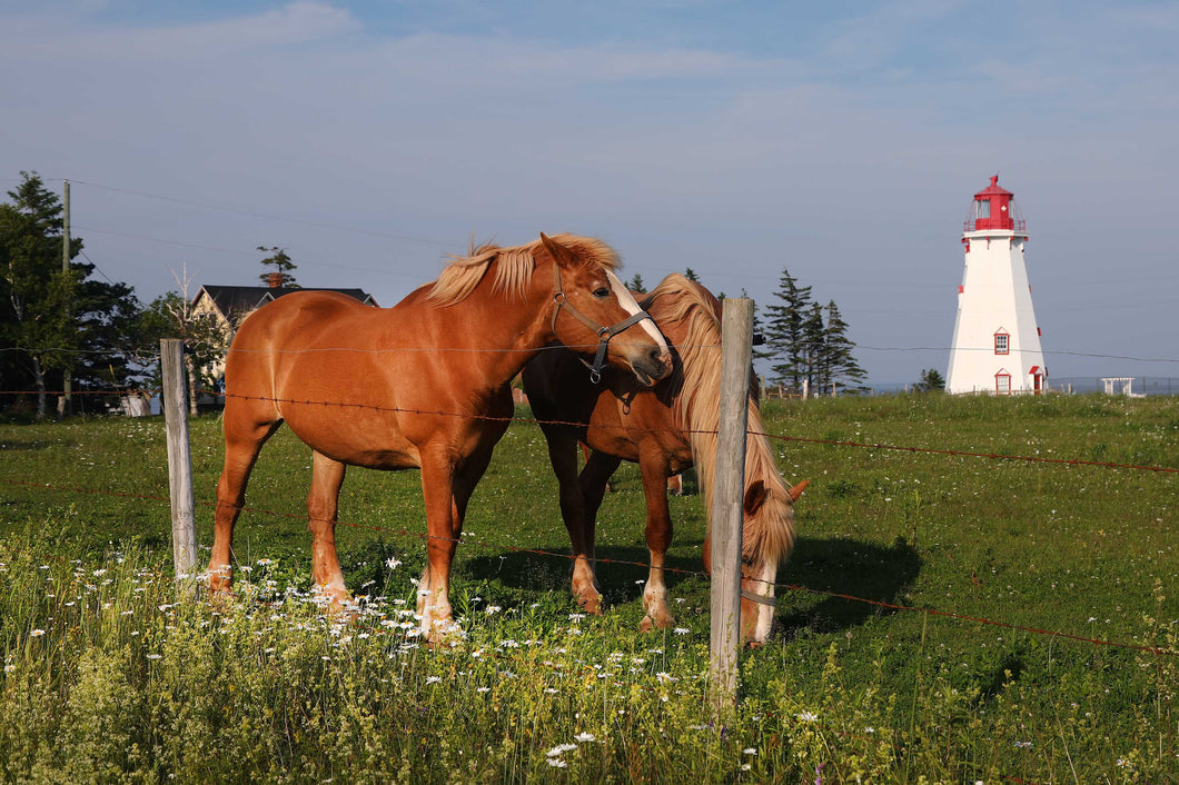 Lighthouse Stables Two