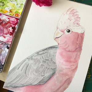 'Galah' - Original watercolour painting - #artistsupportpledge campaign