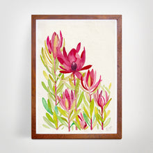 Load image into Gallery viewer, Leucadendron - Fine Art Print