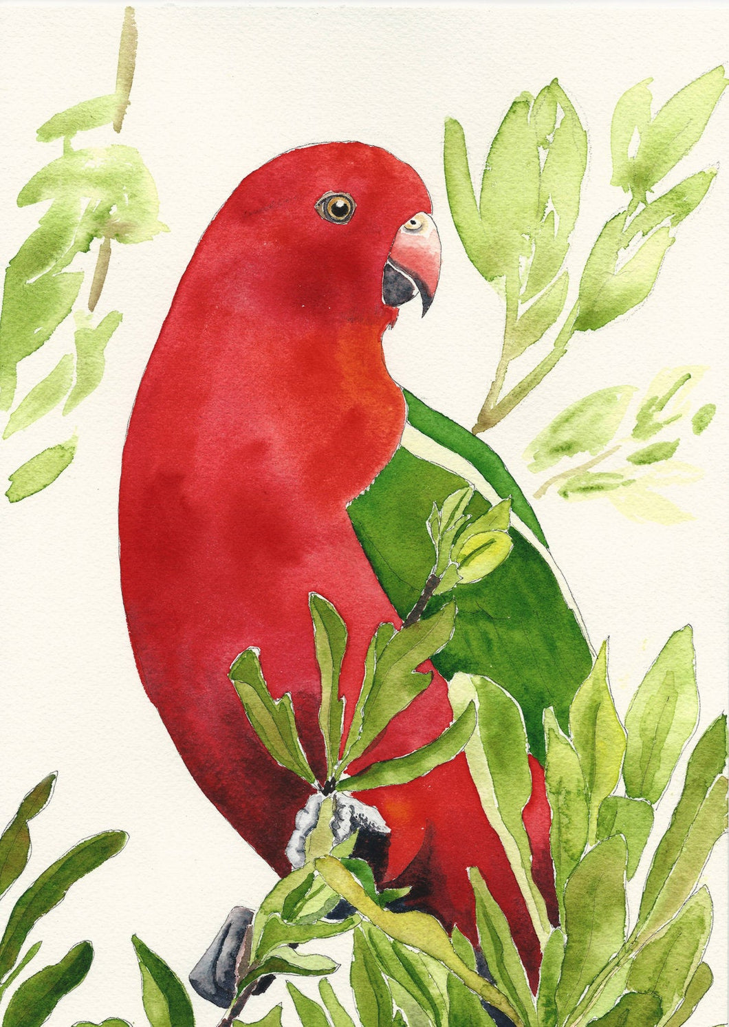 King Parrot print, Australian bird art, Tropical wall art, Tropical decor print, Tropical print, Xmas Gift for her,  Xmas gift bird lover