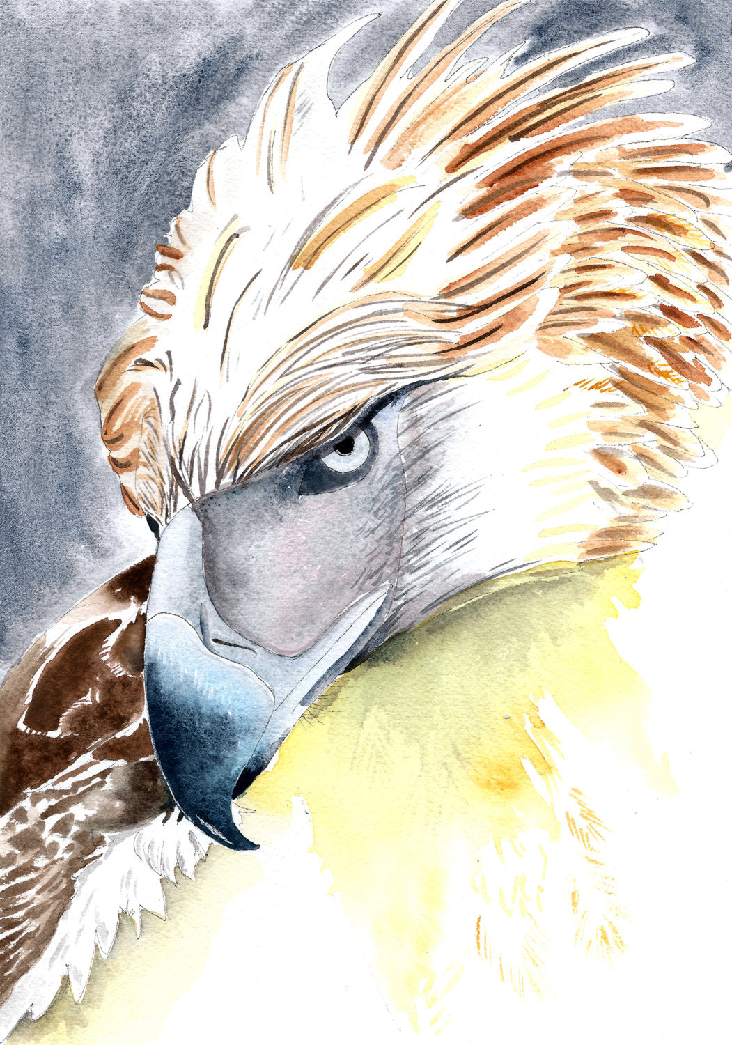 Phillippines Eagle|Spirit bird| Totem |Boys room wall art|Eagle art print|Gift for teenage boy|gift under 50|Watercolor eagle art|wildlife