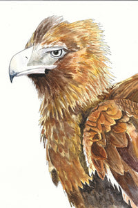 Wedge-Tailed Eagle - Watercolour Fine Art Print