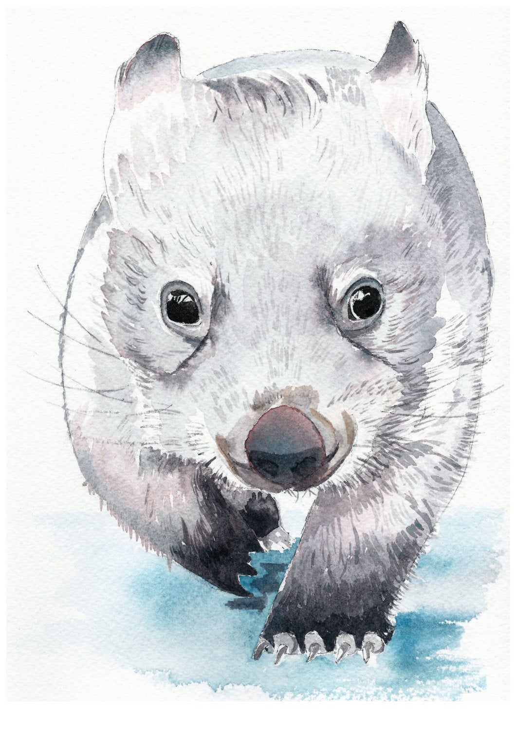 Baby Wombat - Watercolour Fine Art Print