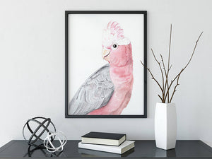 Mothers Day gift pink galah wall art - home decor fine art watercolour prints inspired by Australian flora and fauna to beautify your home