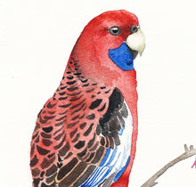 Load image into Gallery viewer, Rosella bird print, gift for mum, Australian bird art, Parrot illustration, tropical wall art, mother's day gift, tropical bird decor