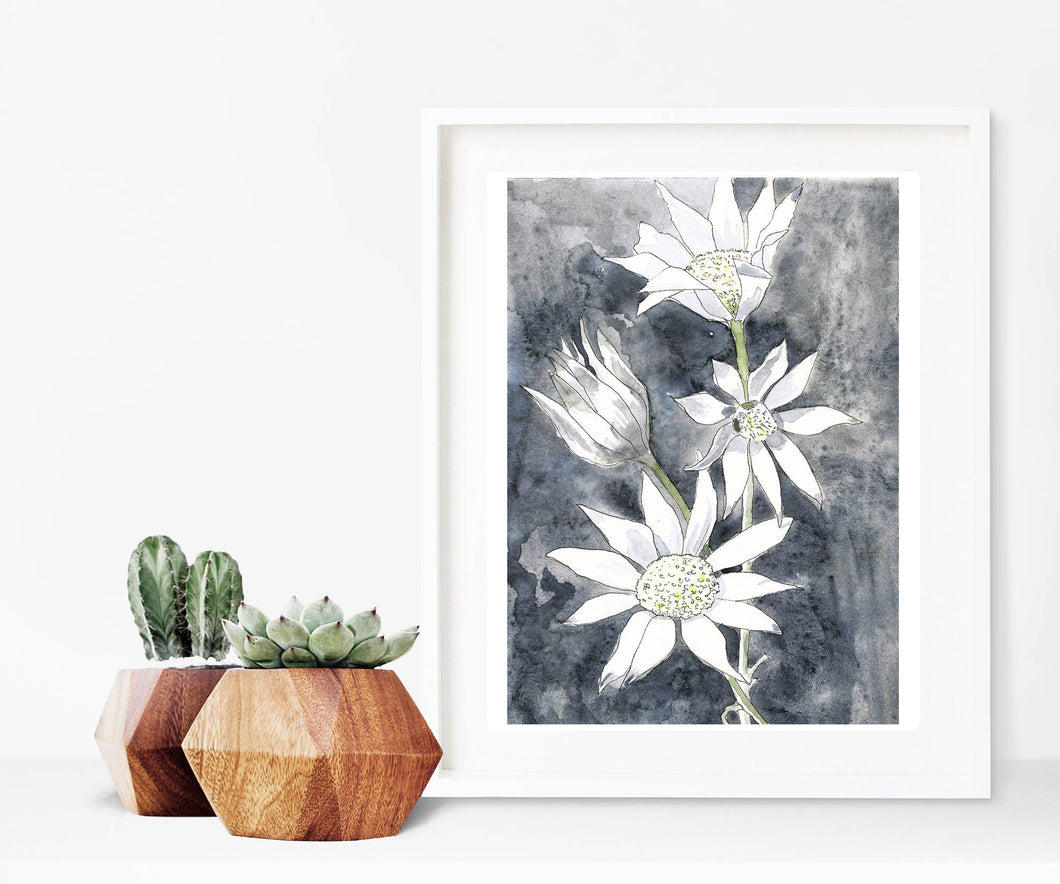 Flannel flowers - watercolour fine art print