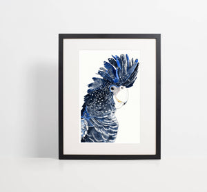 Black Cockatoo - Watercolour Fine Art Print