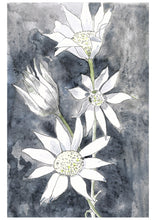 Load image into Gallery viewer, Flannel flowers - watercolour fine art print