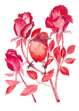 Load image into Gallery viewer, Red Robin and Roses - Fine Art Print