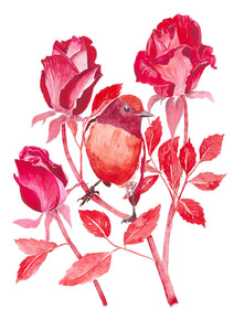 Red Robin and Roses - Fine Art Print