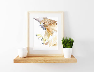 Hawk - Watercolour Fine Art Print