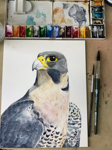 Peregrine - fine art giclée watercolour print