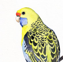 Load image into Gallery viewer, Yellow parrot art print, yellow rosella art, Australian bird art, parrot watercolour, yellow bird print, tropical bird print, yellow decor