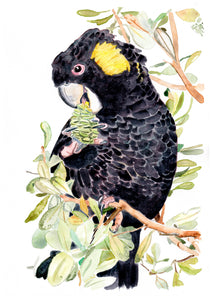 'Cockatoo chow time' - Watercolour Fine Art Print