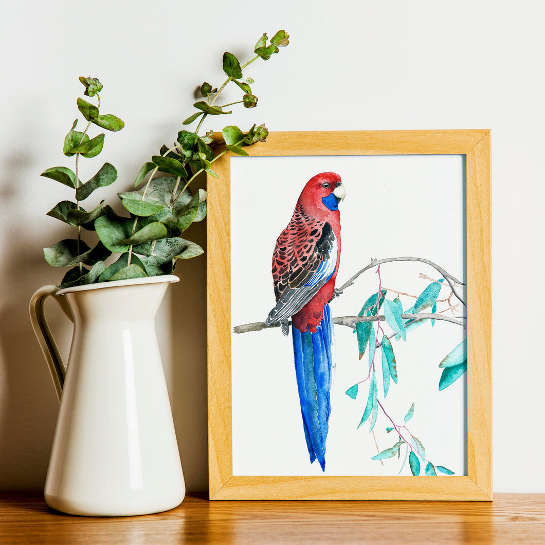 Rosella bird print, gift for mum, Australian bird art, Parrot illustration, tropical wall art, mother's day gift, tropical bird decor