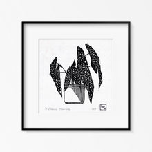 Load image into Gallery viewer, Begonia Maculata - Limited Edition Linocut Print